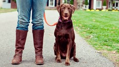 Photo of SIMPLE SOLUTIONS FOR COMMON DOG BEHAVIOR & TRAINING PROBLEMS